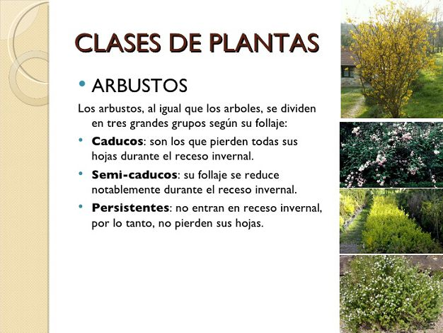 Tipos Plantas Arbustos Pictures to pin on Pinterest