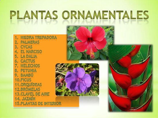 Tipos de plantas ornamentales for 5 plantas decorativas